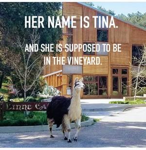 tina llama2 Linne Calodo Update